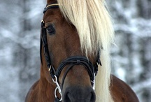 The Finnhorse