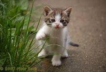 koty / o kotach