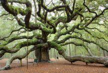 Skog & trær / Foto mm
