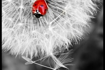 Ladybug love / by Jennifer Levesque