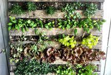 Growing food & herbs