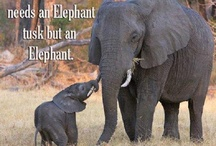 For the Love of Elephants  / by Debbie Hopkins Durrance