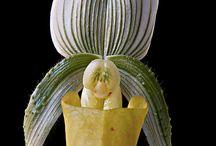 Orhideer
