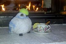 A Tennis Ball and the Alien Snowbird / A Close Encounter of Some Kind
