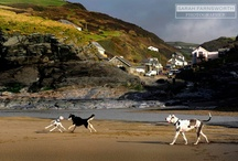 Dog Friendly Beaches / Not all beaches are open to dogs, particularly in the summer months....but these are.