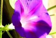 M -- Flowers