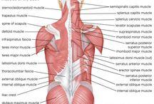 Massage & Anatomy