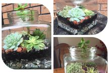 My terrariums