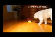Funny Animal / funny animal videos funny animals funny animal funny cats funny video funny videos funny funny pranks funny cat videos funny animal clips animal funny dogs animal attacks funny animal attacks funny babies funny animal video funny accidents funny dog videos animal videos funny