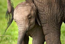 Elephants<3  / by Katherine Hunter