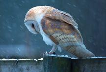 loving owls ♡