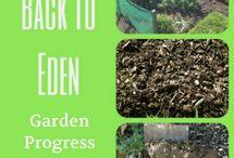 Vege Garden / vege plants