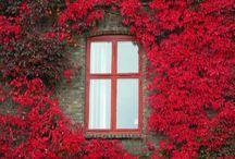 DOORS & WINDOWS Ⅱ / by Consuelo Cavalcanti
