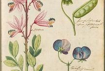 Botaniczne ilustracje