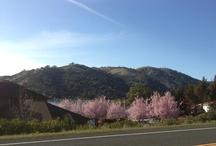 Lake County Beauty