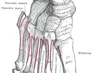 Feet / bones