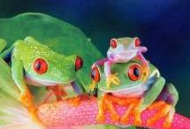 Frogs!! / Interesting Frogs!! / by Phyllis Boone Crowder
