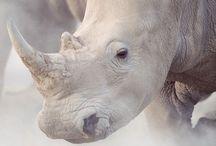Rhino et Hippo !! ♥