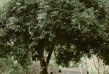 Casamento na árvore