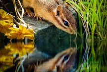 Squirrel Scoiattolo Chipmunk