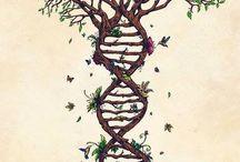 Genes :)