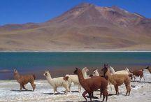 III regiòn de Atacama