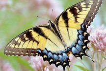 Butterflies / by Cindy Vasquez