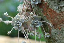 Succulent Luv