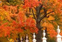 jesień / Natura, przyroda