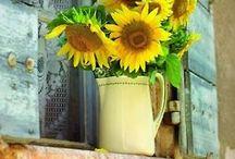 Flori Flowers