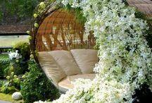 garden;) ##