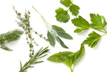 Herbs / by Brenda Spencer