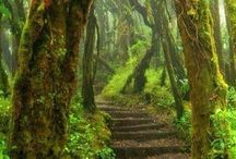 naturel world