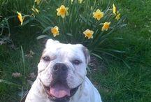 Springtime Pets