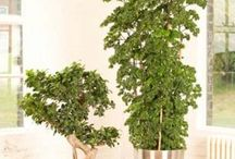 Plants for Offices / Plants that work perfectly in an office environment.