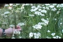 Gardening Videos / by Fine Gardening
