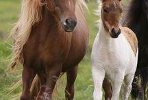 Horses n Ponies