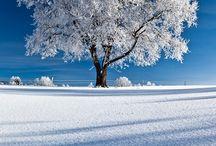 PAESAGGI inverno