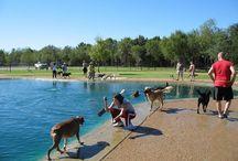 Amazing Dog Parks