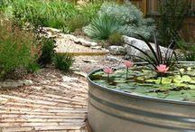 Water in my Garden