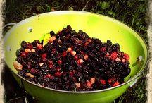 Mulberries / by Deanna Mustafa