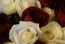 Thousand Roses / Articles likes, highlights, Album, paintings, pictures, poetries and notes about roses