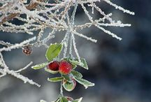 Winter / by Karen Manders