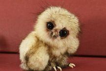 owls uilen