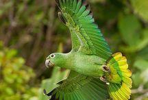 birds flying / Kanatlı hayvanlar
