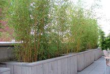 Garden / Tuinideeën