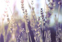 Lavender Dream / Read related post at http://www.aheadfullofpin.com/2016/07/un-tuffo-nella-lavanda-sognando-la.html