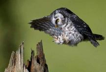 1 simply owlsome / by Jo Ann Slayton