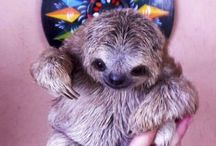 A Sloth of Love