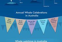 Whale Watching Brisbane | Moreton Bay Region